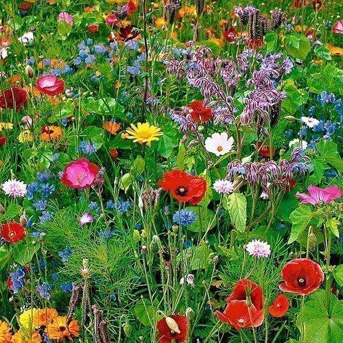 Bloemenpracht, harmoniserend